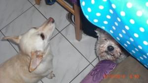 Kira & Kumpel Fritzchen
