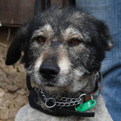 Tina, (Hündin) geb. 03.2007