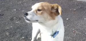 Daisy, Hündin geb. 2011