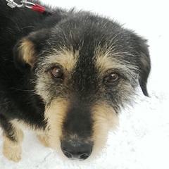 Poppy, Hündin geb. 02.01.2009