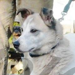 Lola, Hündin geb. 11.11.2005 † 07.04.2018