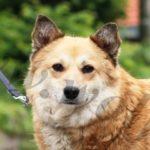 Foxy, Hündin geb. 15.08.2016