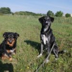 Freya & Kumpel