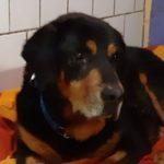 Buddy, Rüde geb. 06/2008
