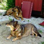 Maja (Selma) und Mio (Mario)