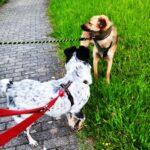 Maxi & Fiene